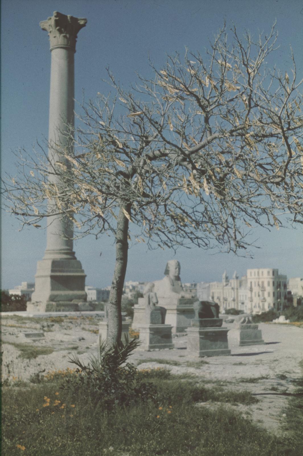 Александрия. Александрийский столп (Колонна Помпея) и сфинкс