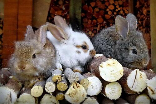 Братцы - кролики