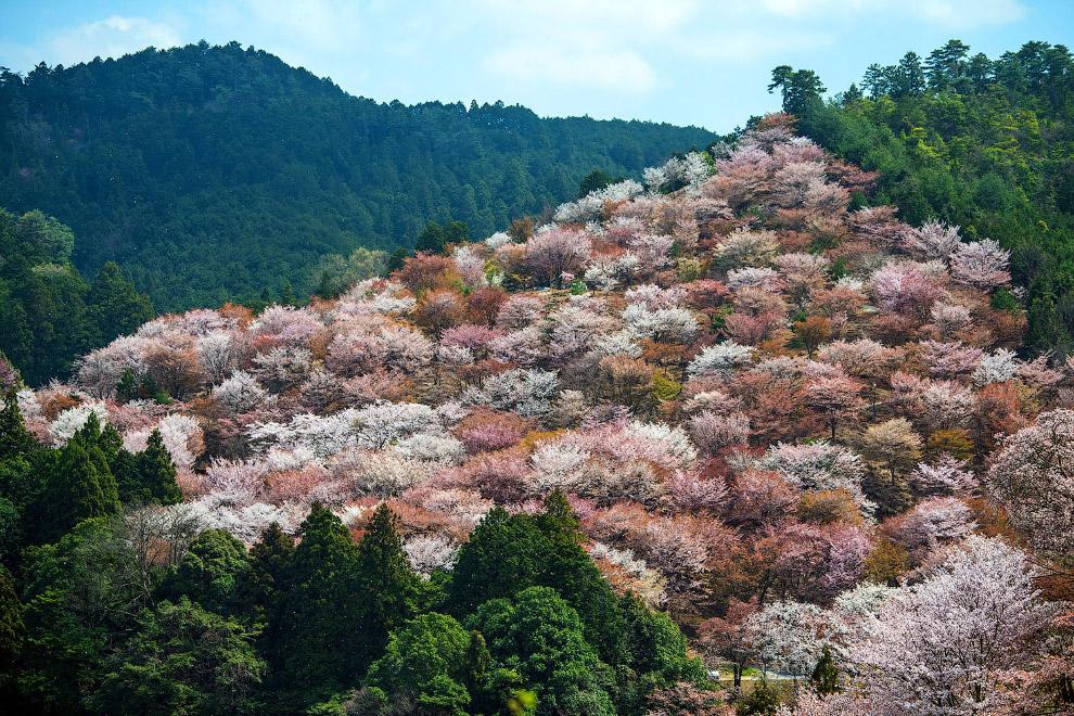 HD В мире весна