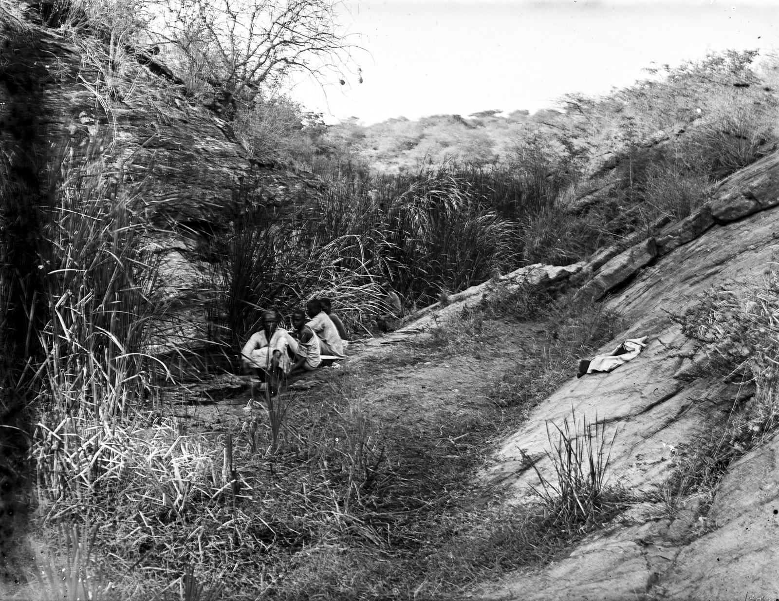 236. Группа на скалистом склоне, покрытом травой и кустарниковой растительностью