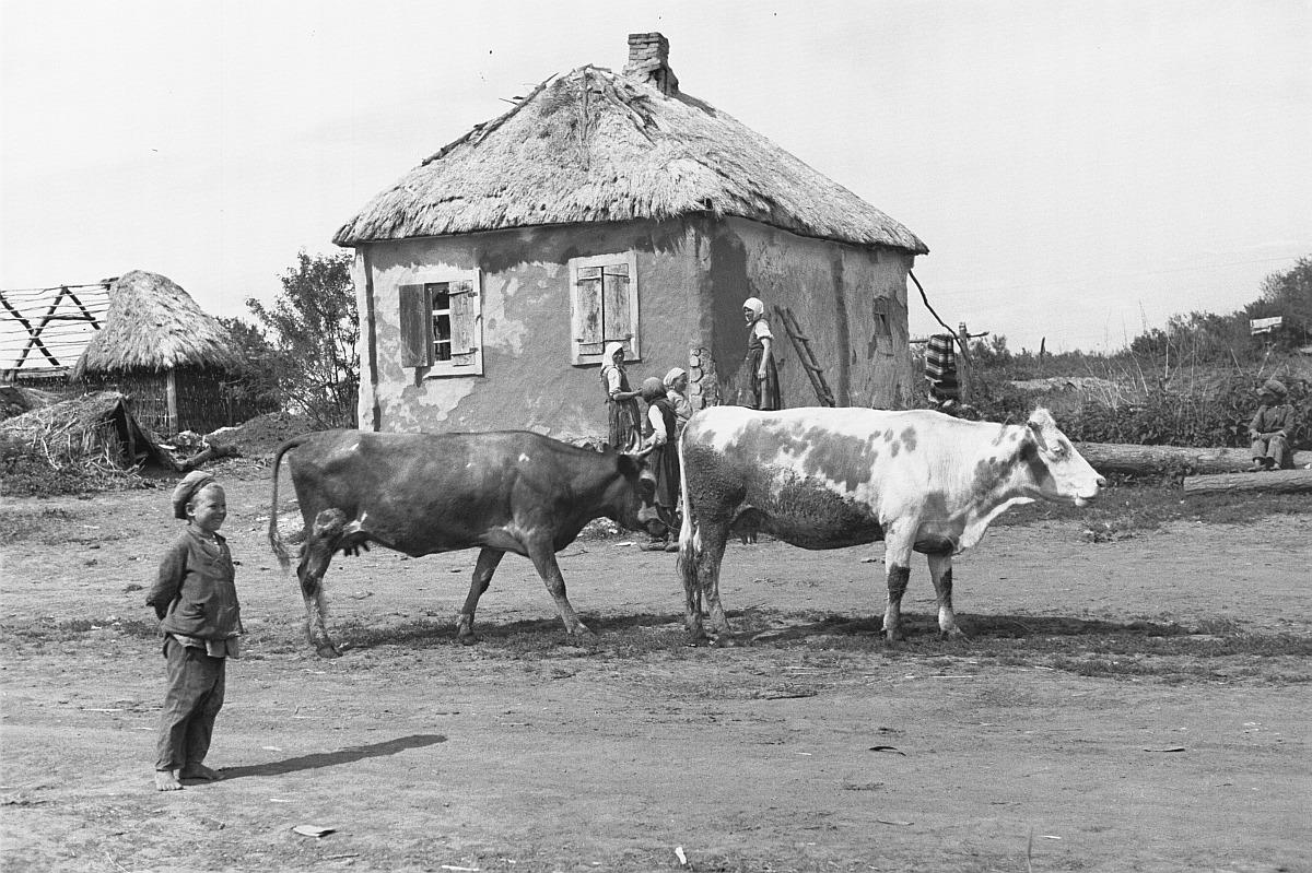 Крестьянский дом. На переднем плане мальчик и две коровы