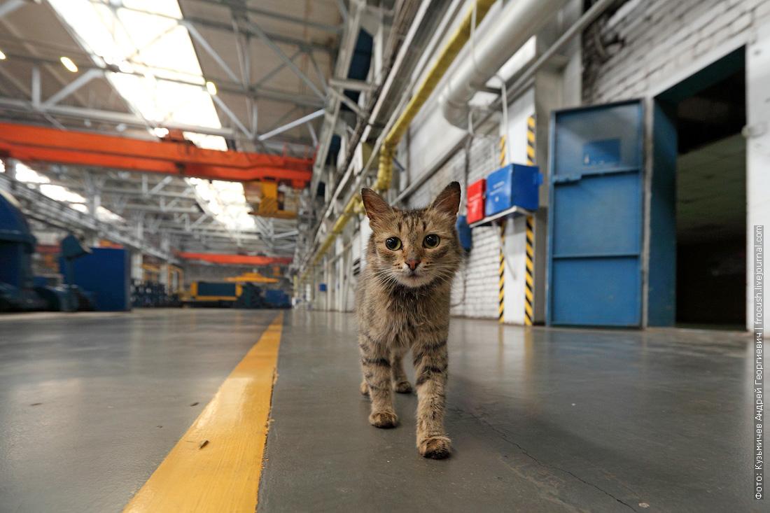 кот в цехе зеленодольский судостроительный завод имени А.М.Горького