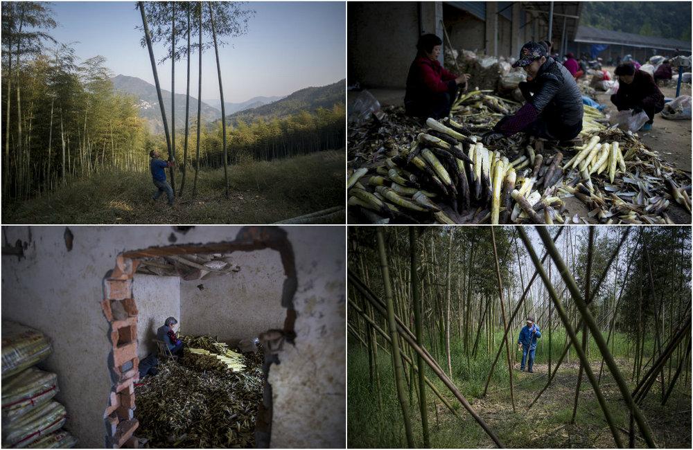 China Bamboo Business