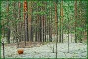 http://img-fotki.yandex.ru/get/100269/15842935.389/0_eaec4_11b88c7b_orig.jpg