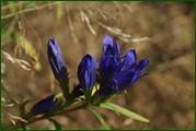 http://img-fotki.yandex.ru/get/100269/15842935.38b/0_eaf04_a1ee6fe7_orig.jpg