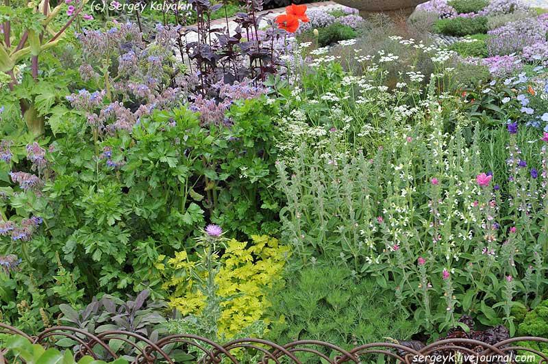 A modern Apothecary Garden (15).jpg