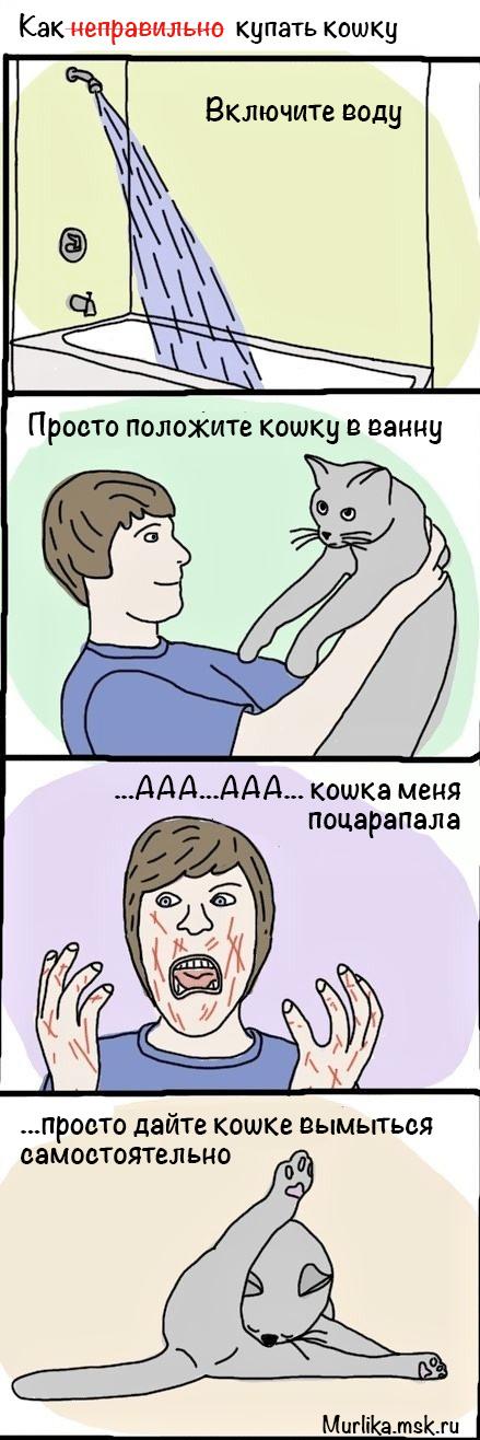 как неправильно купать кошку