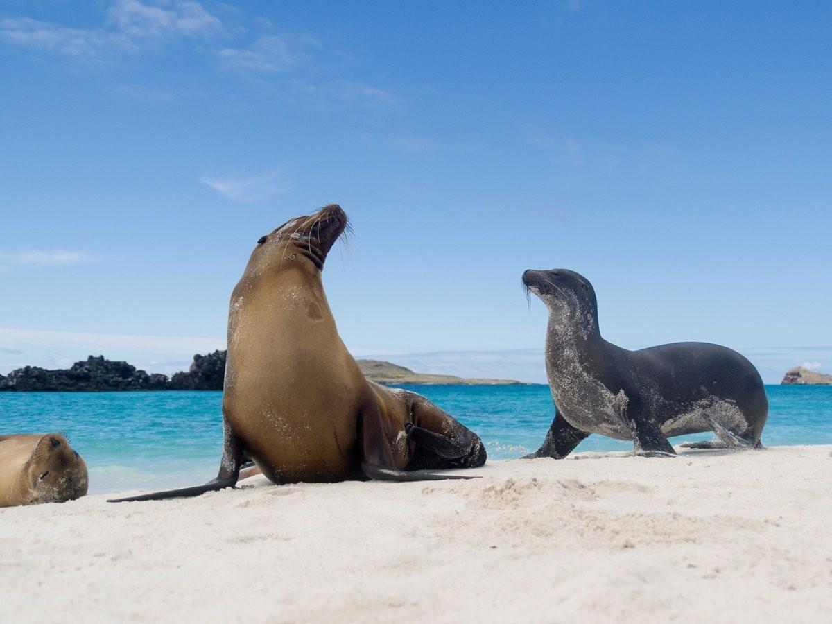 6. Посмотрите на гигантских черепах и морских львов на Галапагосских островах.