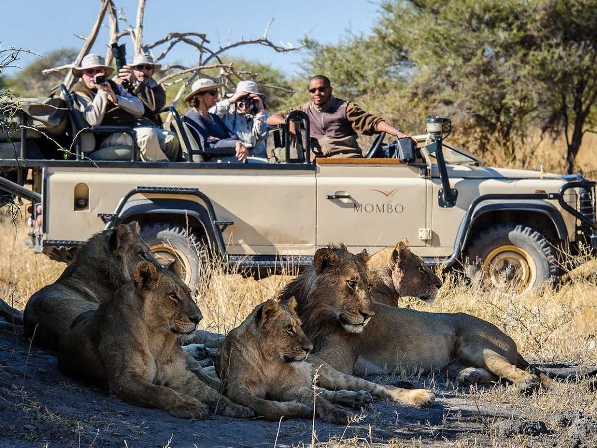 38. Во время сафари в Ботсване вы можете увидеть множество диких животных.