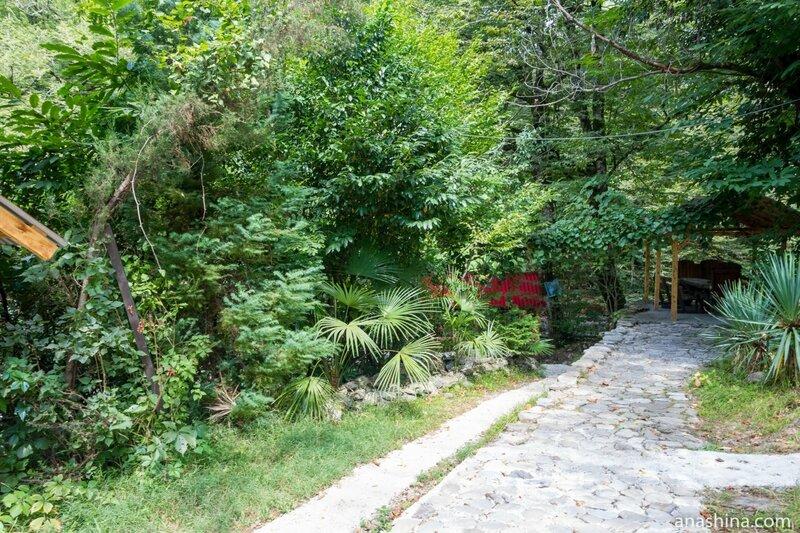 Пальмы и другая растительность, Корыта, Дагомыс