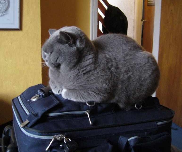 чемодан собран1.jpg
