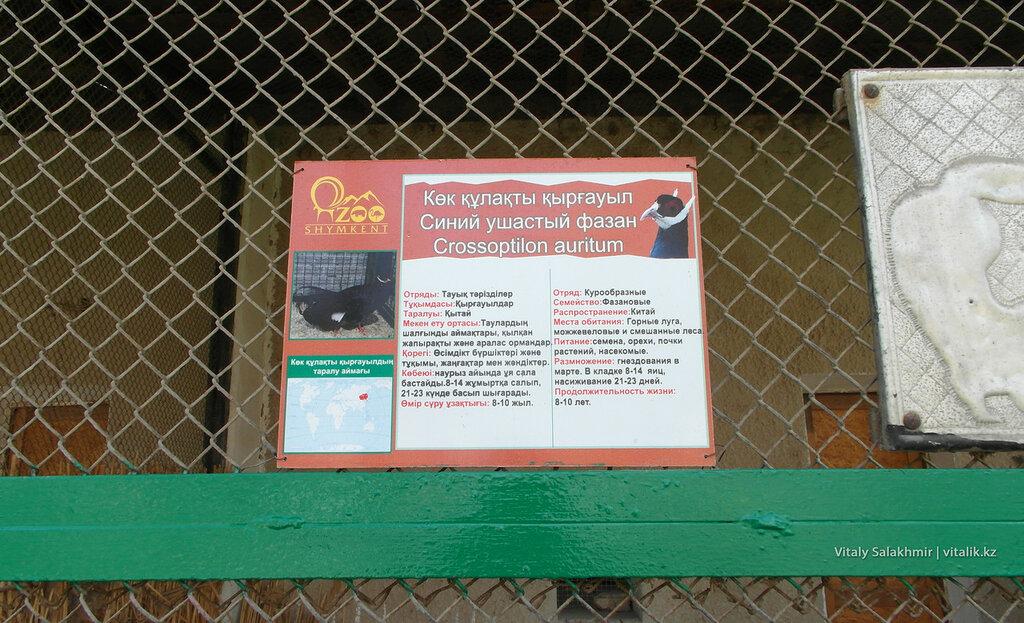 Синий ушастый фазан, табличка на клетке, зоопарк Шымкента