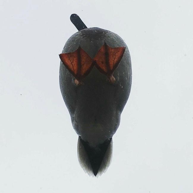 Фотография фотограф утки утка техника явление явления под водой