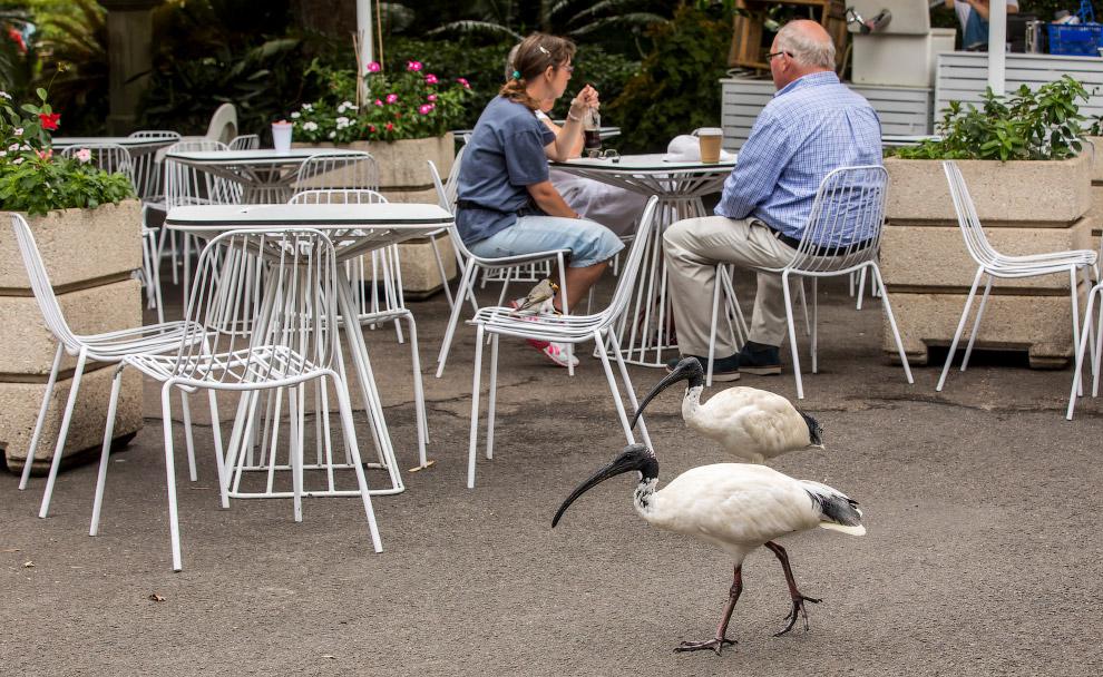 HD Австралия среда обитания города за городом город птицы птица
