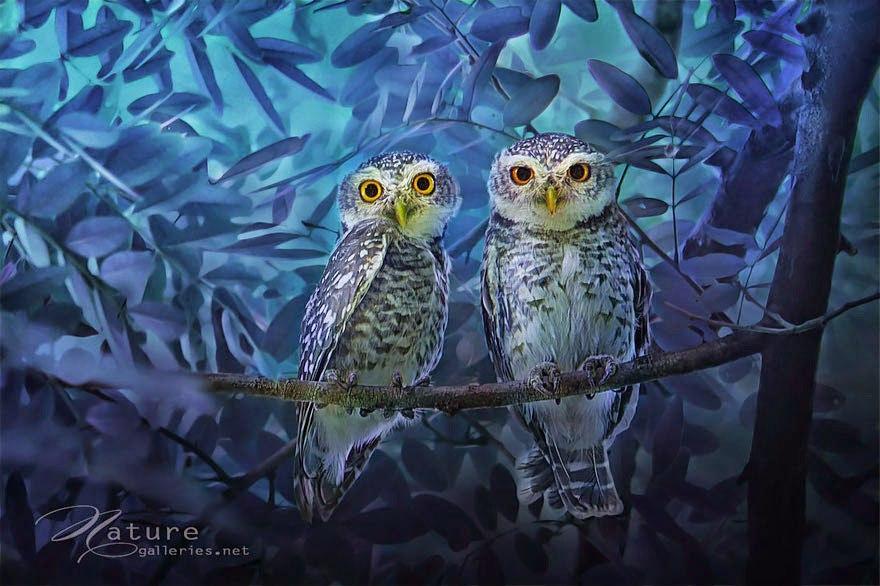 Такие удивительные совы