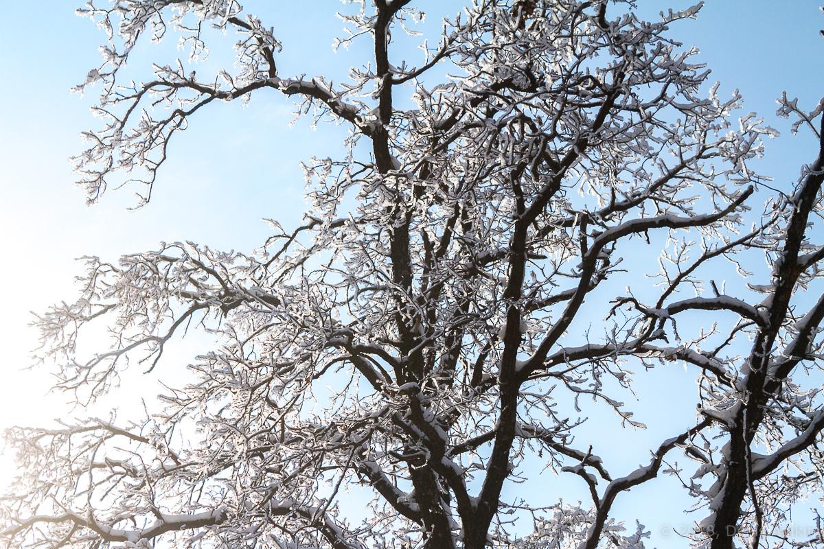 Зима кумысная поляна фото 3