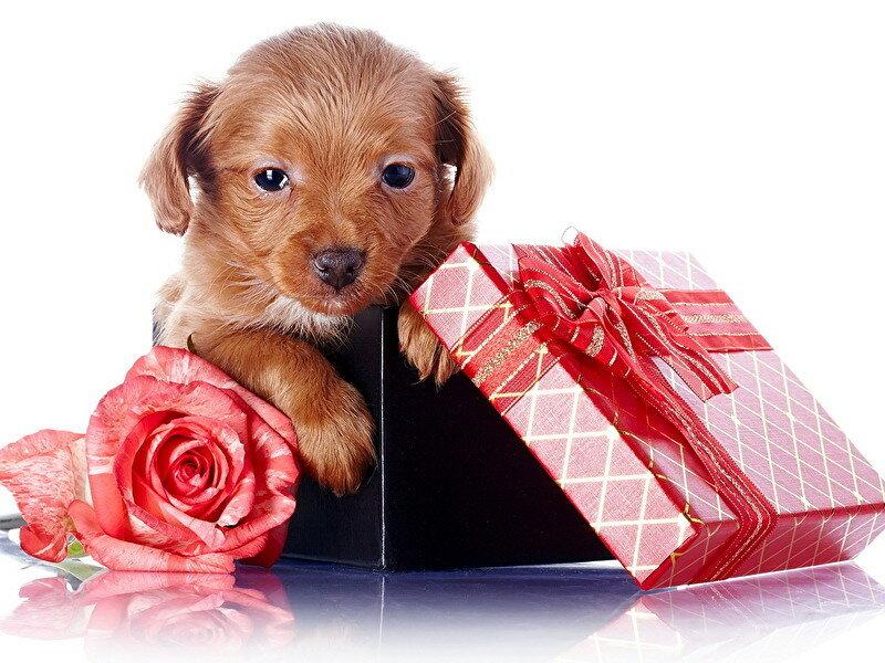 Открытки с поздравлением с собачками
