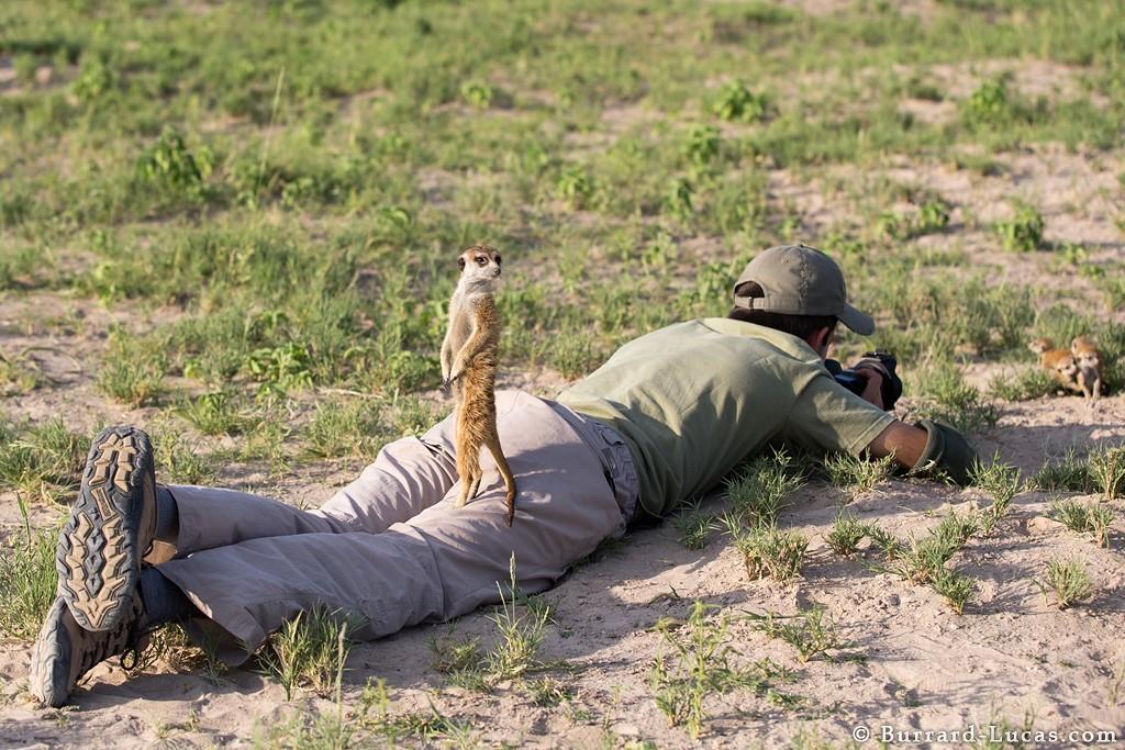 Ботсвана дружба сурикаты фотограф