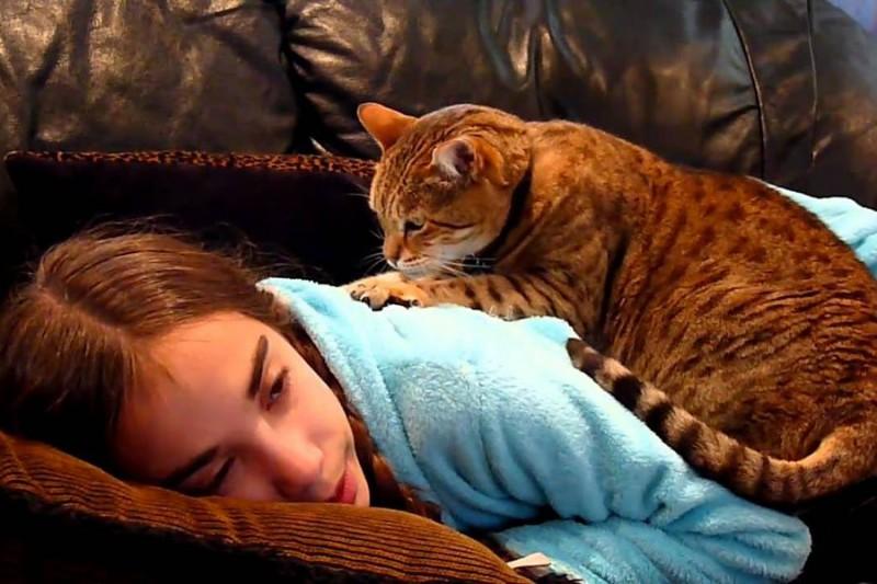 Какие животные могут лечить человека?