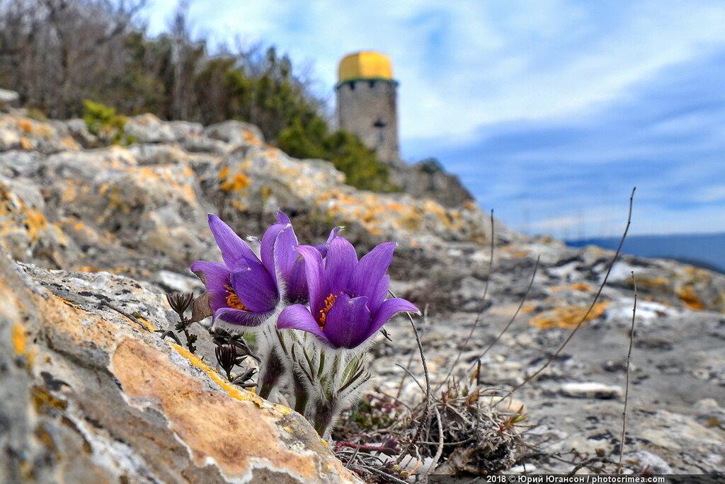 Цветы пещерных монастырей Крыма. Шулдан