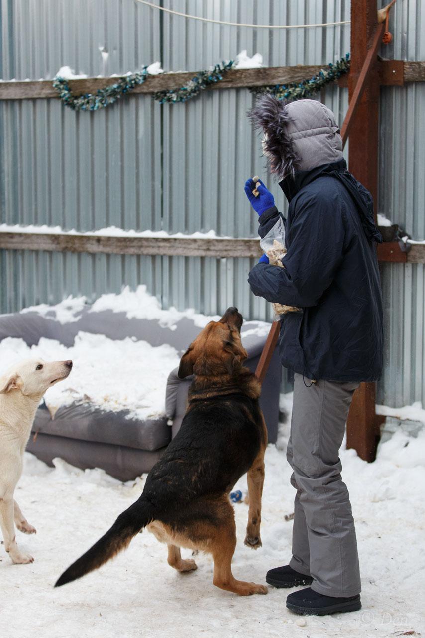 Бланко Нуар из приюта догпорт фото