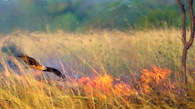 животные биология мастер учения ученый соколы особенности намбия