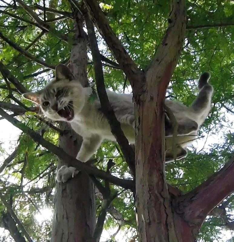 деревья коты кошки пенсионер спасение