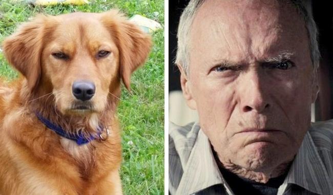 собаки недоумение подборка человек лица двойник двойники пес