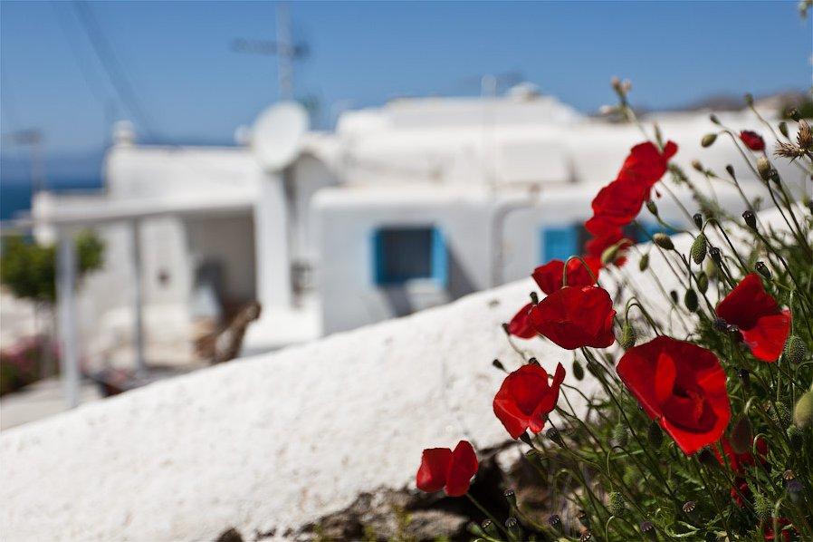 Греция острова остров белье цветы белый цвета цвет