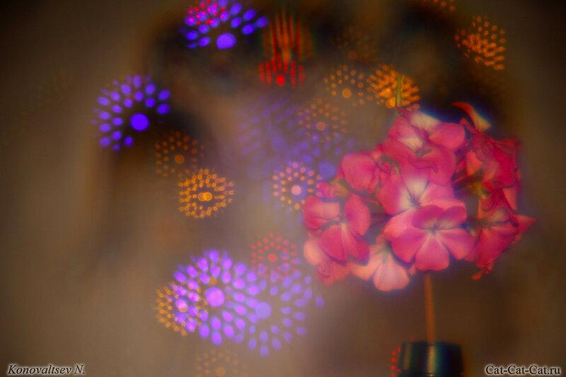 Цветы и хрусталь на фоне гирлянды