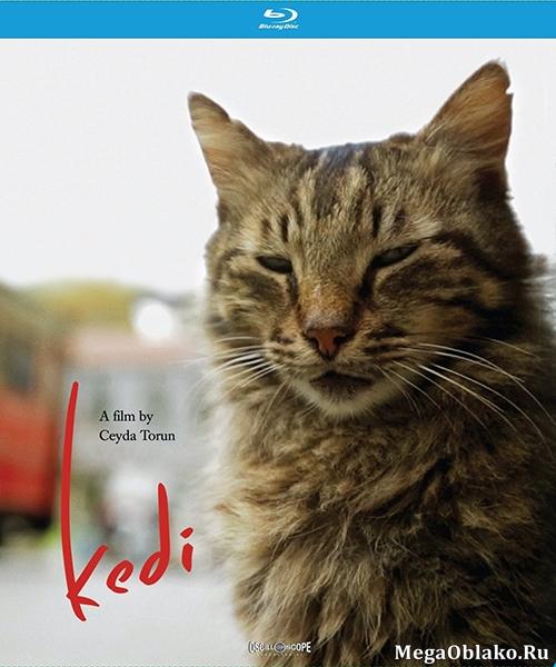 Город кошек / Kedi (2016/BDRip/HDRip)