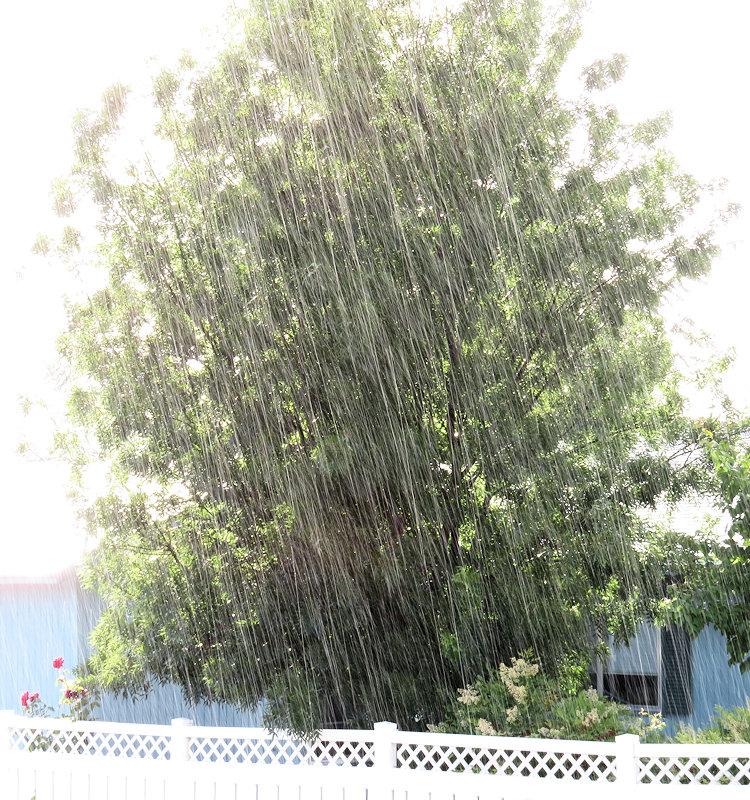 Дождь. 1/20 сек