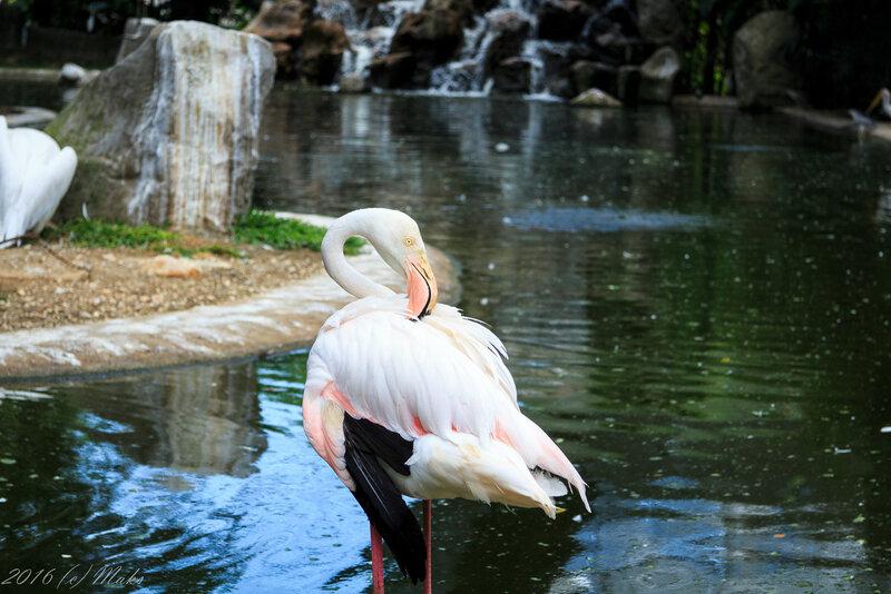 Куала-Лумпур: парк птиц