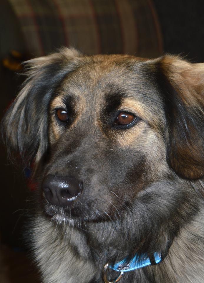 Масяня собака из приюта догпорт