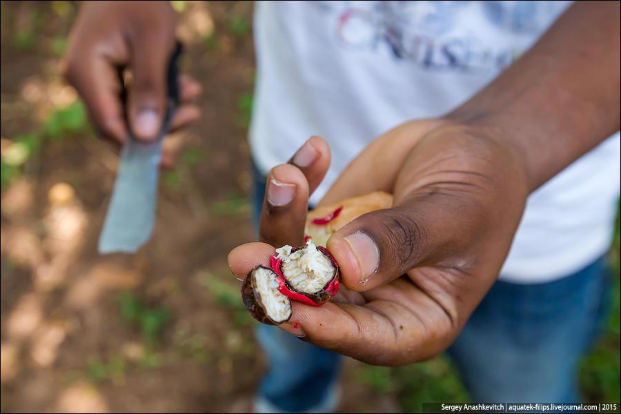 8. Сердцевину высушенного мускатного ореха применяют в кулинарии, пищевой и парфюмерной промышленнос