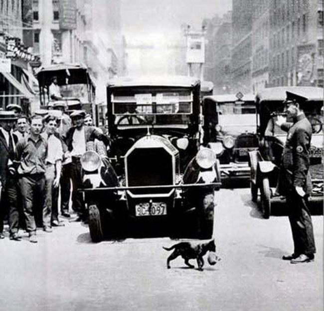Мама-кошка остановила движение в Нью-Йорке, 1925 год.