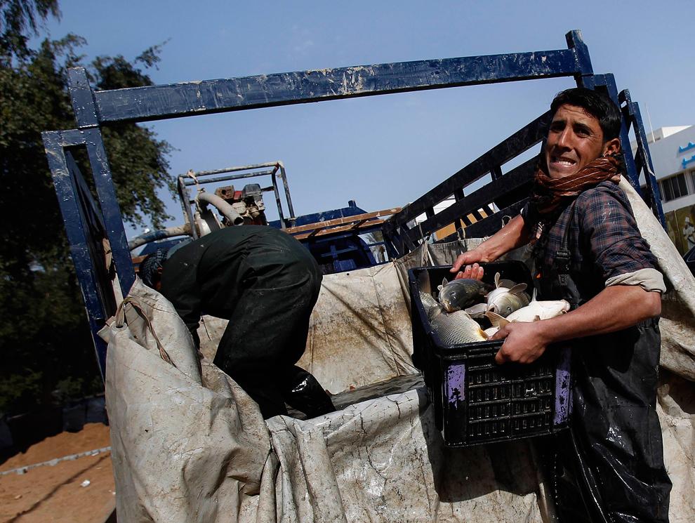 15. Иракский торговец рыбой на рынке вдоль реки Тигр в Багдаде. (Shannon Stapleton/Reuters)