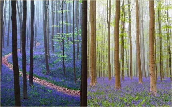 Местечко это носит название Халлербос – это красивейший лес, который славится своими дикими ги
