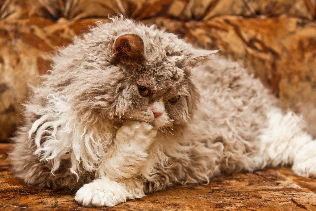 11. Кошка не ложится спать в бигуди.