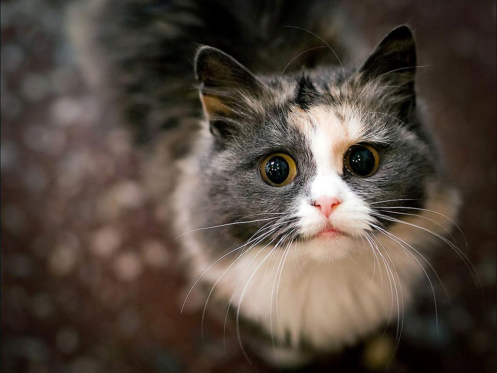 20. Кошка всегда рада доброму слову.