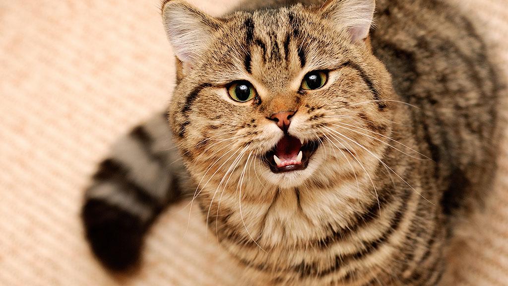 28. Кошка все понимает, но говорит только «мяу» и «мр-р-р-р».