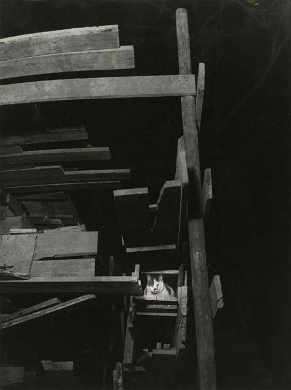 1946. Бродячий кот