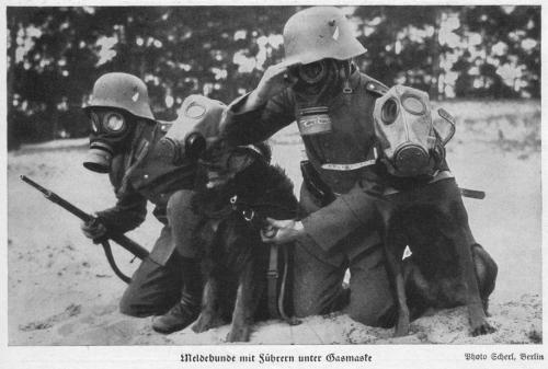 Messenger dogs wearing gas masks.jpg