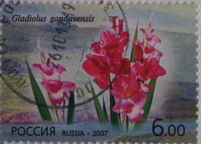 2007 Флора. РФ - КНДР. гладиолус 6