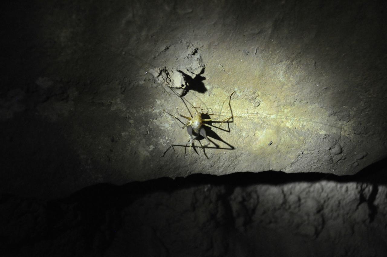 Подземные жители