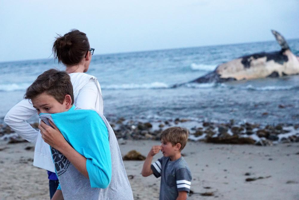 Мертвого кита выбросило на пляж в Калифорнии