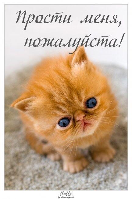 Прости меня, пожалуйста! рыжий котенок открытки фото рисунки картинки поздравления