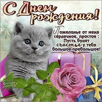 Открытки с днем рождения с котами, котиками, кошками, котятами