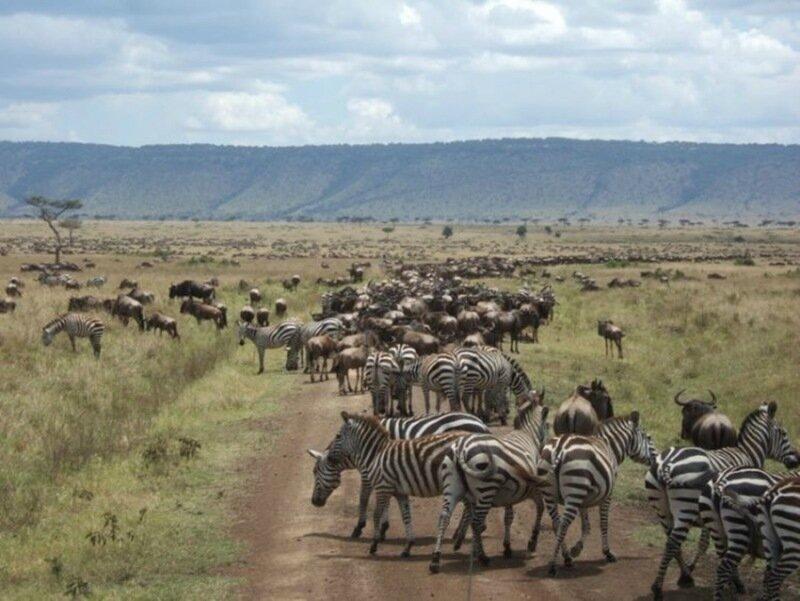 Миграция диких животных: фотографии журнала National Geographic