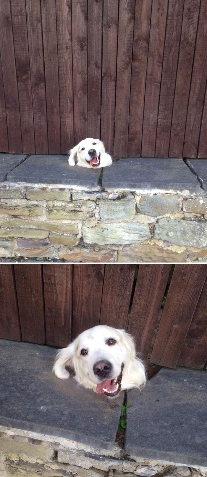 17 собак, которые ну очень хотят сказать «привет» (17 фото)